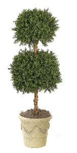 4 Foot Wintergreen Boxwood Double Ball Topiary
